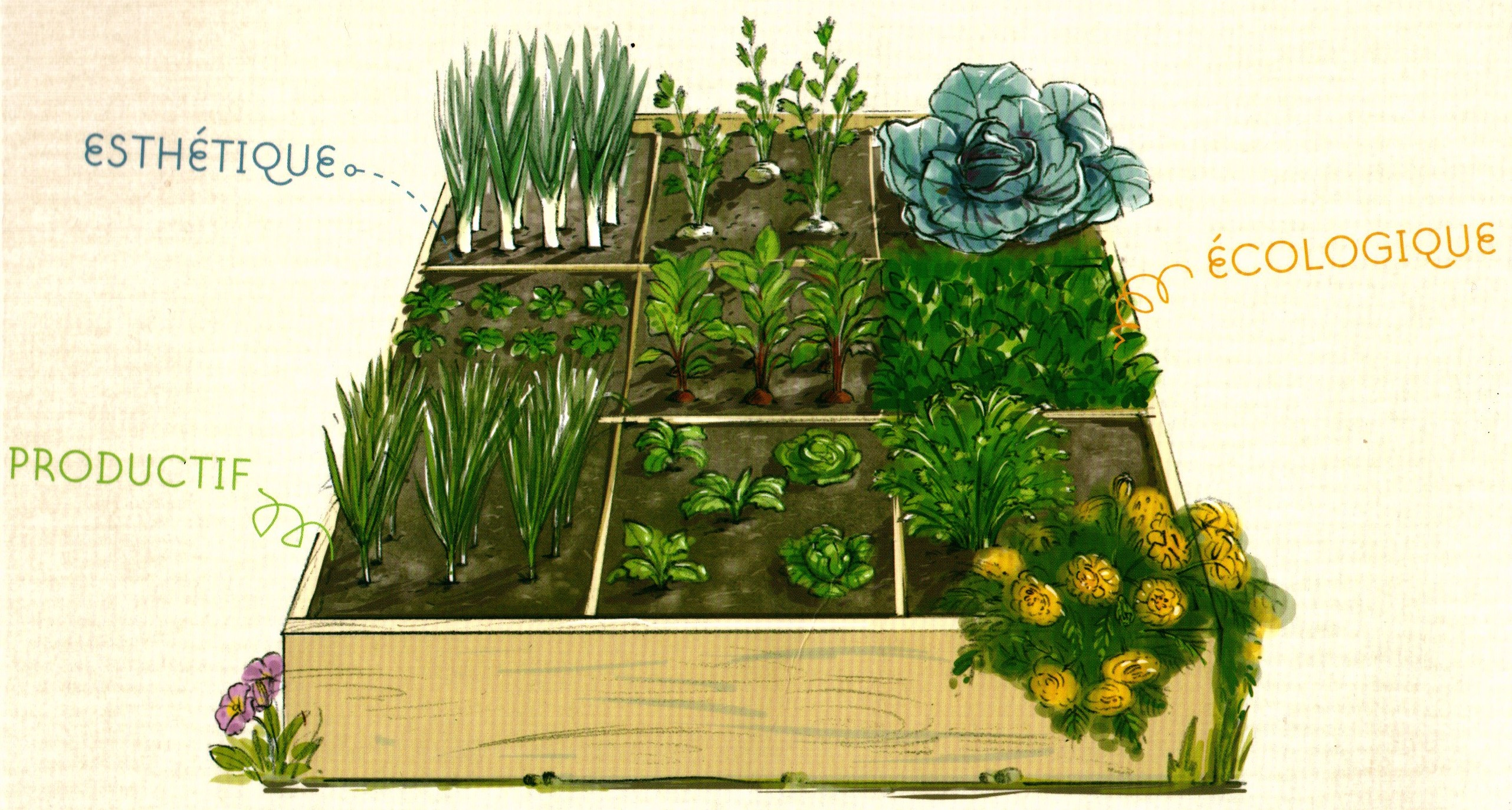 College pierre vernier ornans le jardin en carr s for Jardin en carres plan